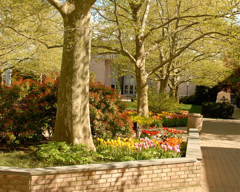 Photo of trees on campus